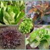 Lot de 4 salades